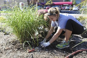 Student association student government landscaping fargo circle