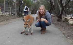 fixed kangaroo
