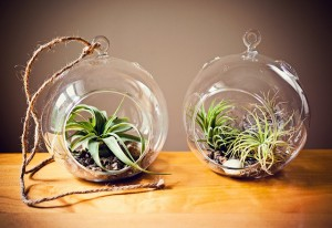 two terrariums on table